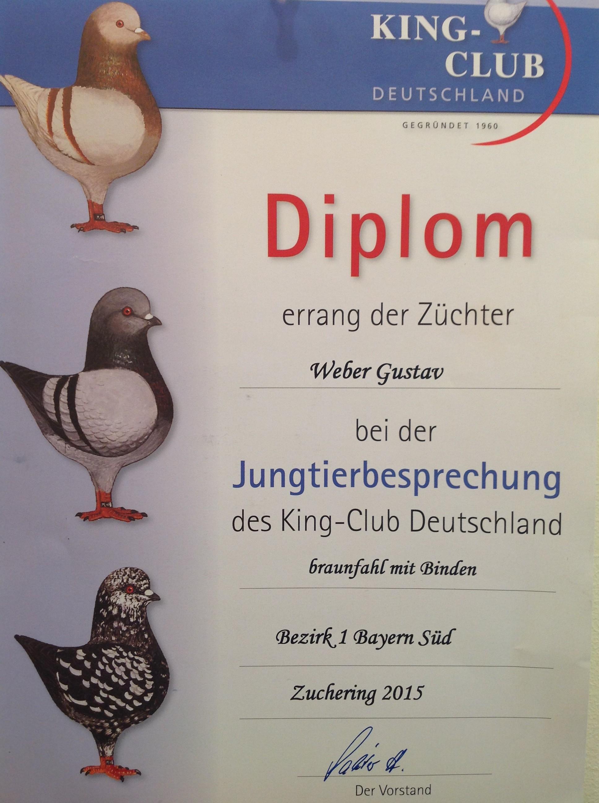 JTB KCD 2015 Bez.1 in Zuchering HV Diplom auf o.1 braunfahl