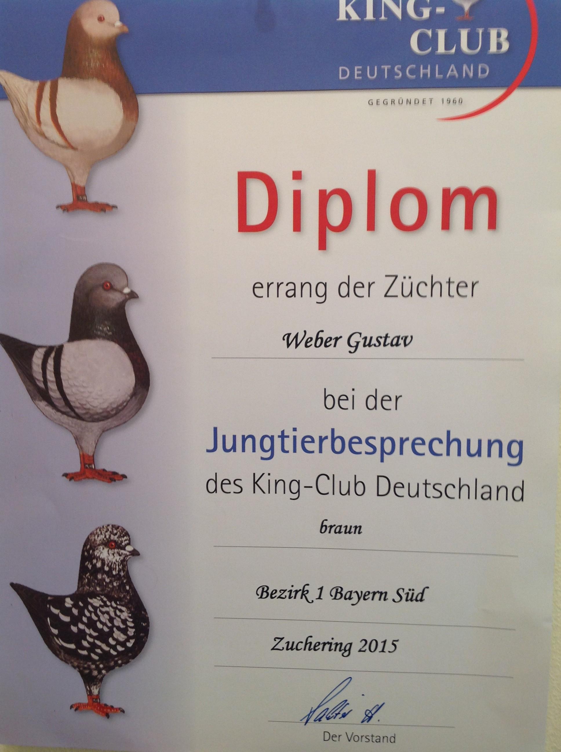 JTB KCD 2015 Bez.1 in Zuchering HV Diplom auf 0.1 Braun
