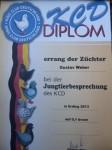 HV Diplom 0,1 braun JTB Erding 2013